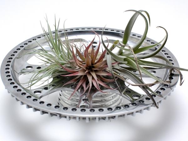 air-plants 1