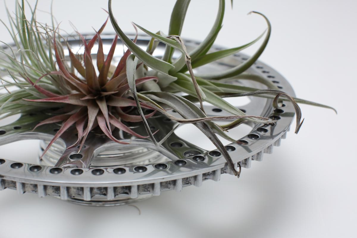 air-plants 2