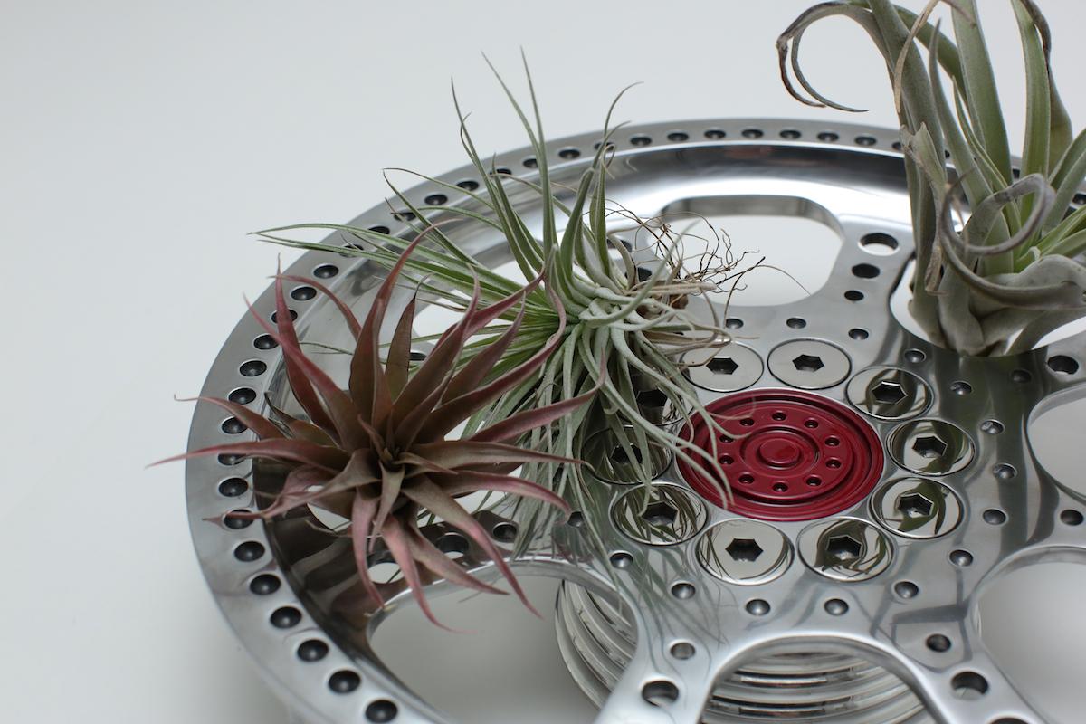 air-plants 4