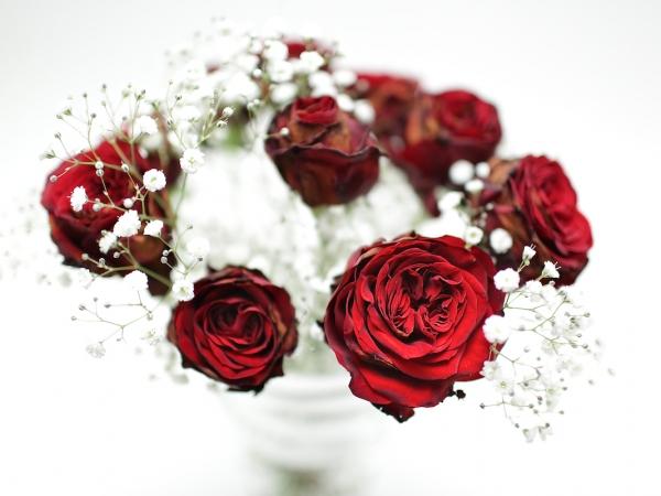 red-rose-3