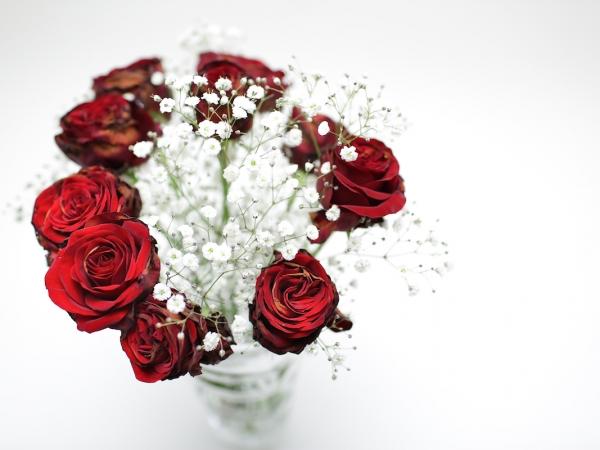 red-rose-4