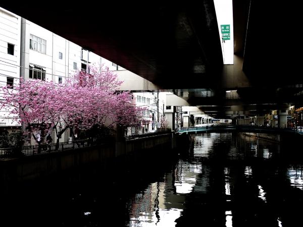 yokohama-hizakura 04