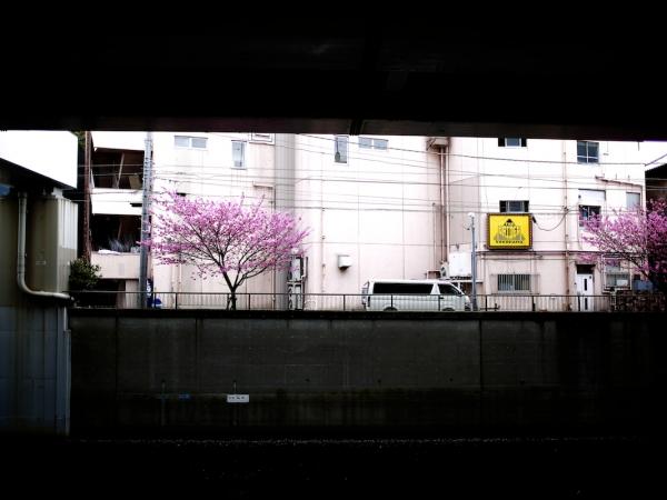 yokohama-hizakura 06