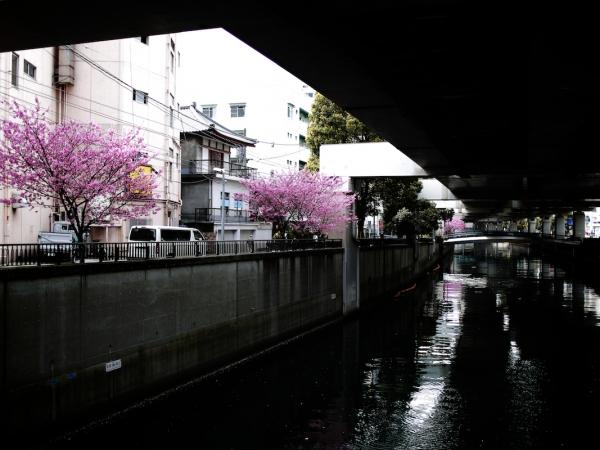 yokohama-hizakura 07