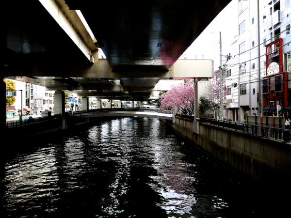 yokohama-hizakura 08