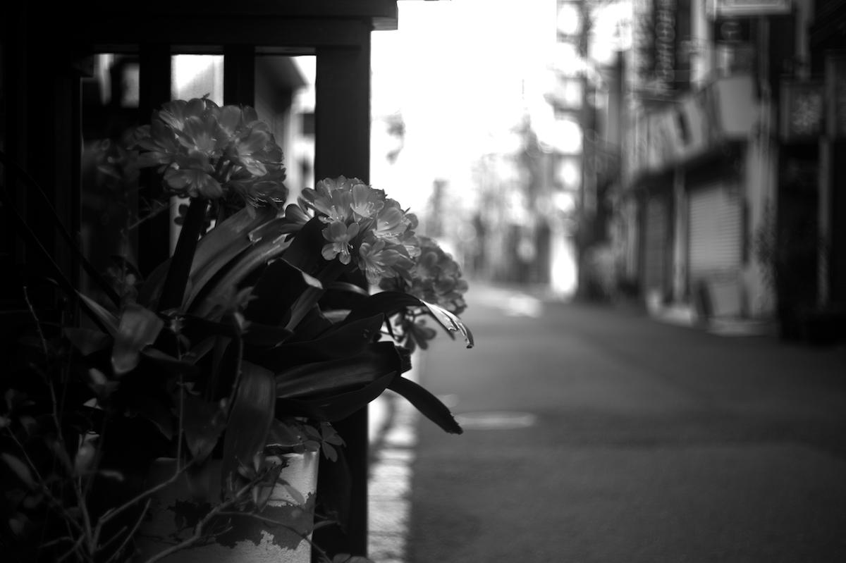 yokohama_early 01 (2)