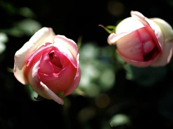 flower_saiwai 02