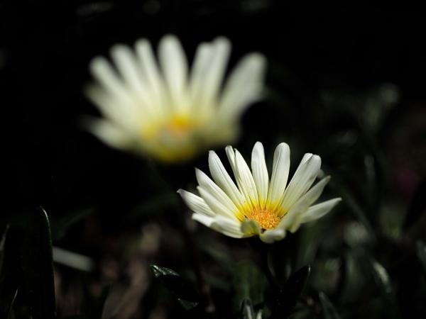flower_saiwai 03