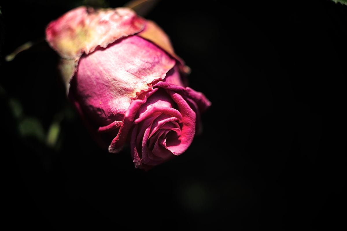 flower_saiwai 07